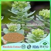 EU standard black cohosh root extract with low price