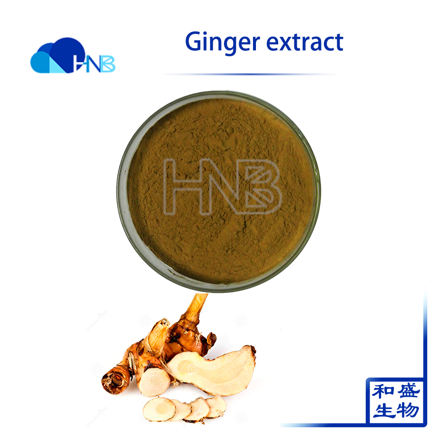 100% Pure Ginger extract / jengibre / gingembre p.e. with best price