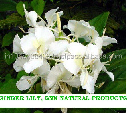 100% Pure & Natural Ginger Lily/Gingerlily Essential Oil