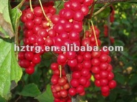 Enhance Sexual: Schisandra Berries P.E powder