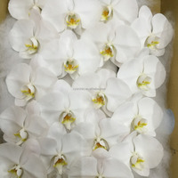 Fancy Classic white Cut stem Mother's Day Orchid in Taiwan