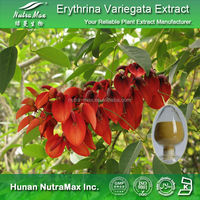 100% Natural Erythrina Variegata Extract,Erythrina Variegata Extract Powder,Erythrina Variegata Extract Supplier 4:1~20:1