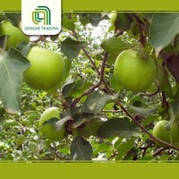 Wholesale 2015 New fresh green apples