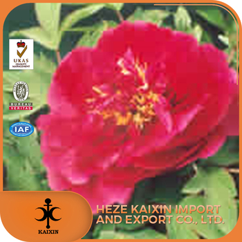 easy to handle competitive price white pure natural peony root extract