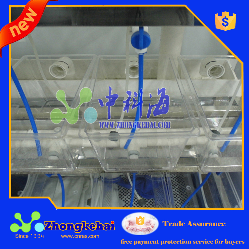 Indoor factory recirculating aquaculture of Zebrafish