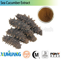 gamat sea cucumber/mexico sea cucumber/sea cucumber extract