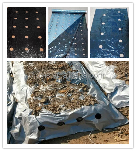 PE Silver & Black agricultural mulch film with holes