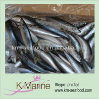 Good pacific mackerel fish whole round