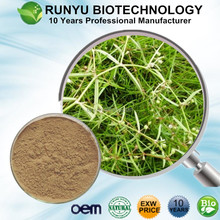 High quality free samples Herba Hedyotis extract, organic Spreading Hedyotis P.E.