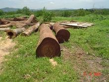 African Rosewood ,Puple Heart and other South American wood Logs and Lumbers