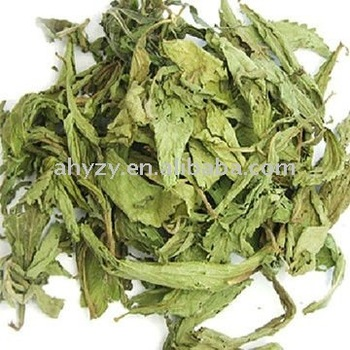 Hot product stevia rebaudiana
