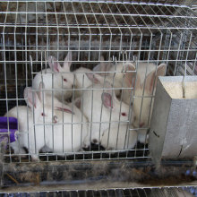easy clean and durable rabbit breeding industrial farming cage on sale in China