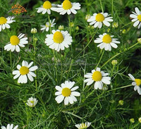 Anti-oxidant chamomile flower extract