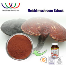Reishi Mushroom Extract/ganoderma extract/pure natural ganoderma lucidum Extract