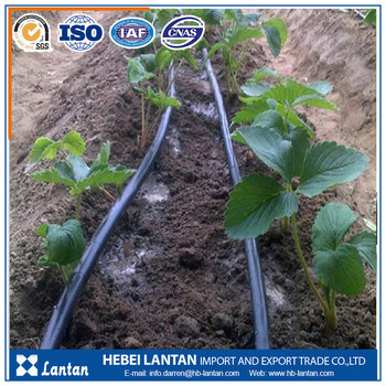 Non toxic odorless PE drip irrigation pipes for drip watering system