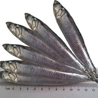 New Landing Fresh Frozen Anchovy For