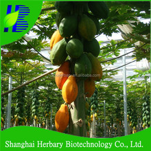 2018 High sprouting rate plant seed hybrid papaya seed