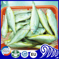 Whole Round Yellow Croaker Fish Price,200-300 300-400 400-500 500-600g Frozen Yellow Croaker For Market Sale