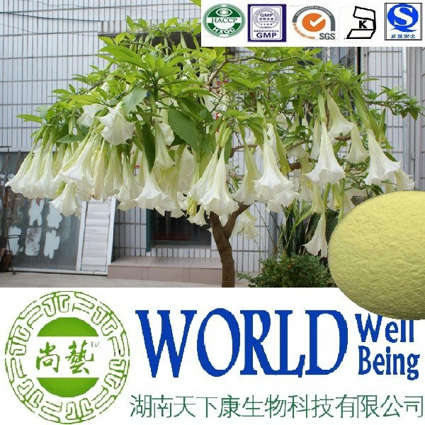 Hot sale Upreight Datura flower extract/Scopolamine hydrobromide/Anticholinergic plant extract
