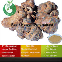 Chinese herbal sanchi panax notoginseng