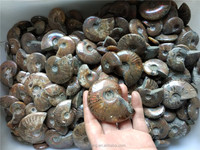 Wholesale natural rainbow snail fossils, Natural rainbow polished Jade Pattern Ammonite Fossil Madagascar