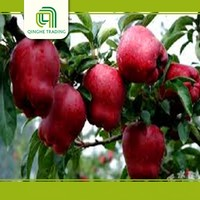 farm bulk fresh apples red delicious from china