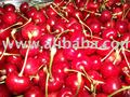 Ziraat 0900 variety Turkish Napolyon Cherry