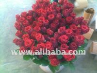 Fresh Fresh cut hot Roses Roses