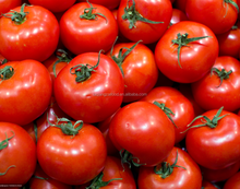 fresh red chinese tomato with best price and quality