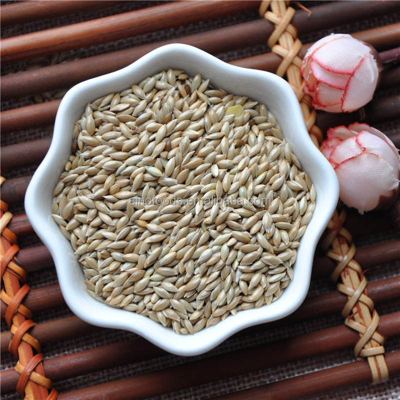 Jin Si Que Top quality New Crop Organic Canary Seed
