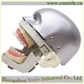 Phantom head/dental teaching simulator/simulator for teaching