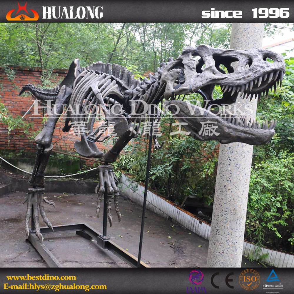 Scientific Museum Dinosaur Skull For Sale