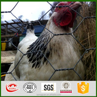 Qiangguan factory chicken wire/ High Quality Low Carton Steel Stainless Wire Hexagonal Wire Mesh