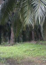 Indonesia Crude Palm Oil & RBD Palm Olein