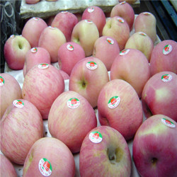 Red fuji apple hot sale in ShanXi China factory