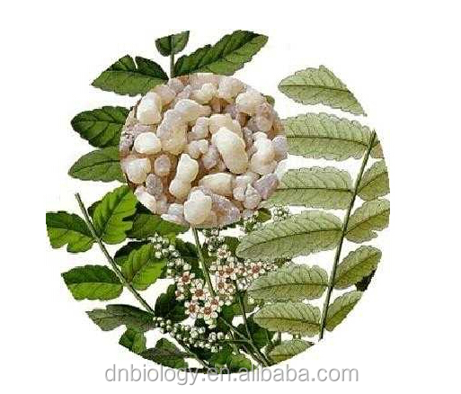 Factory price Boswellic Acid Frankincense extract Boswellia Serrata Extract / Olibanum / frankincense gum