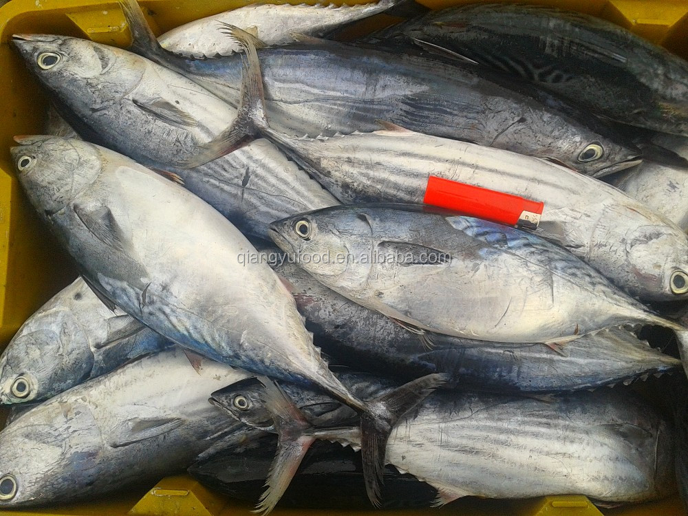 how to cook skipjack tuna