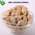 Bulk Dried Ginger Whole for Sale