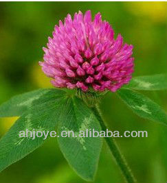 Pure Natural Red Clover Extract with high purity