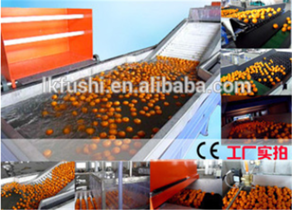 FACTORY OUTLET(FUSHI BRAND) FRUIT&VEGETABLE PROCESSING WASHING WAXING AND SORTING LINE