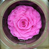 Last Longer Fresh Natural Roses Miss Rose Wood For Birthday Party Gift