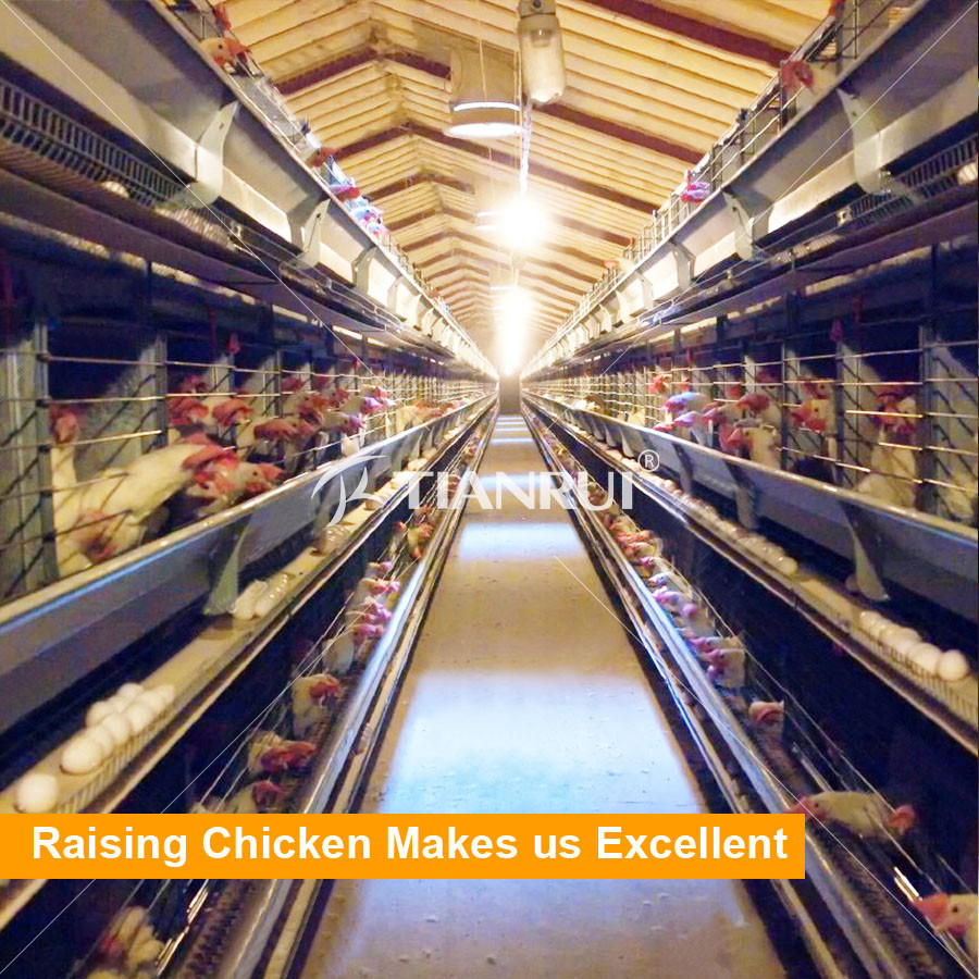 Design High Quality Automatic Chicken Egg Layer Cages