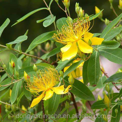 Hypericum Perforatum Extract Hypericins,St John's Wort P.E. with best quality and competitive price