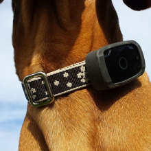 Small Cheap GPS Pet Tracker GPS For Child and Pet Tracking Device