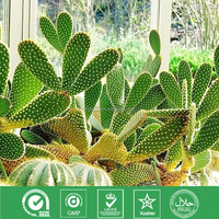 Good Quality 100% Pure Natural prickly pear Extract