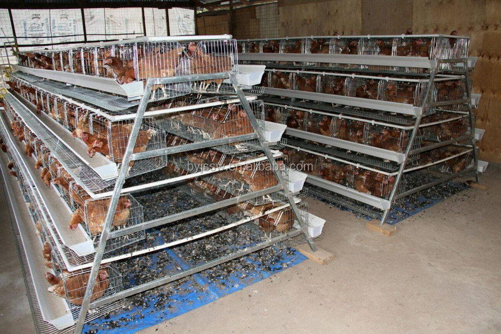 High Qulaity Lay Egg Chicken Cage From Manufacture