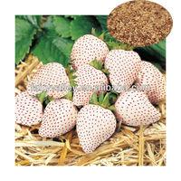 Grow organic garden strawberries seeds indoors for sale