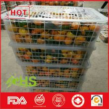 Mandarin citrus orange/baby orange for sale