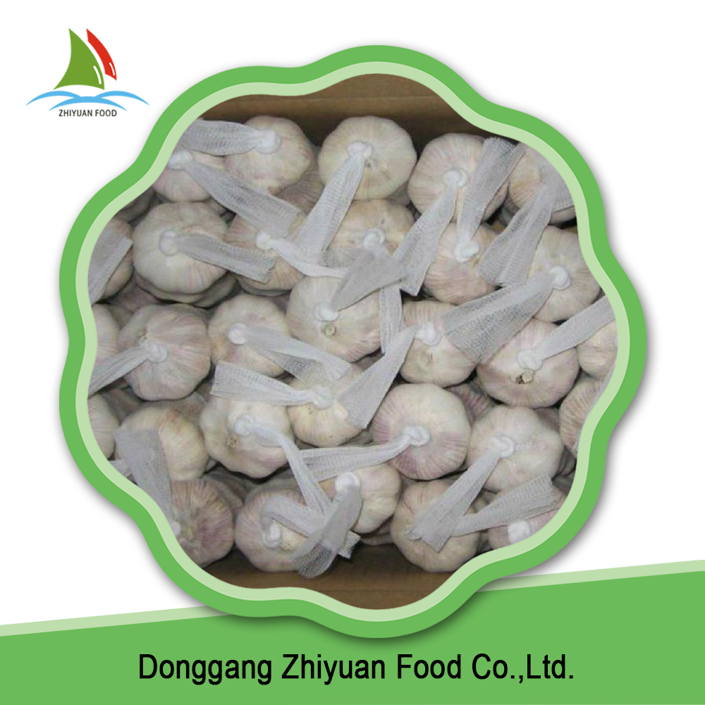 China Ningxia bulk fresh pure common white garlic