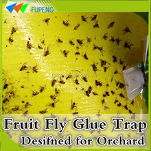 FUPENG New Design Pollution-Free Fruit Fly Glue Board Fly Sticky Paper